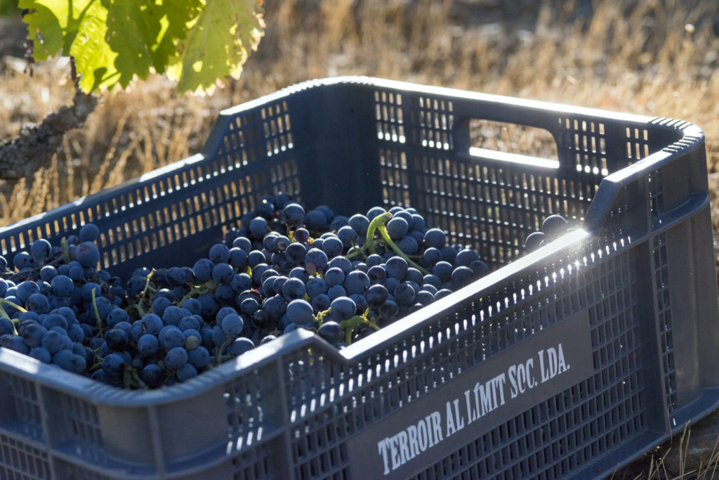 Exklusive Weinreise nach Priorat, in das Terroir al Limit (Spanien)